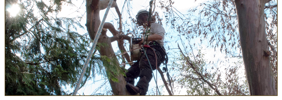 R.D Tree Surgery Slideshow Image